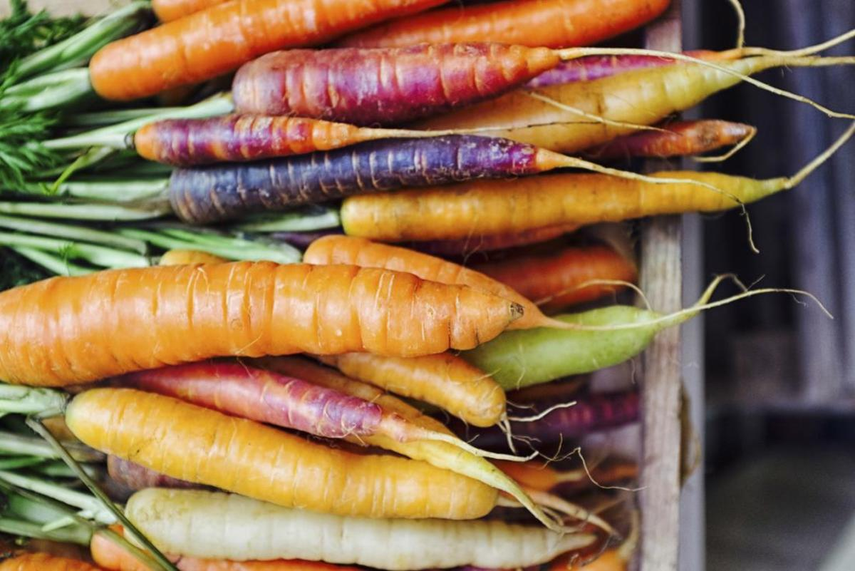 Different colors of carrots