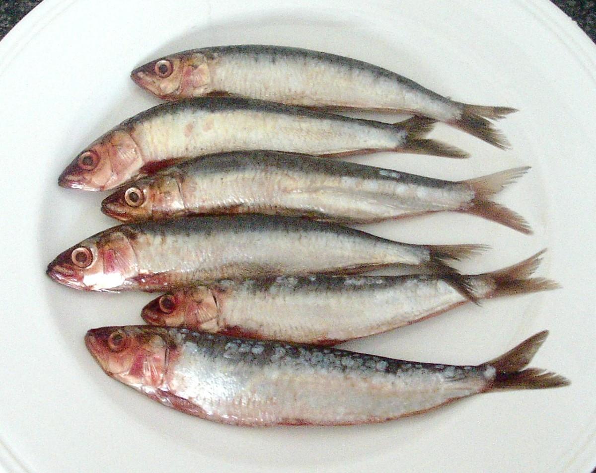 Fresh whole sardines