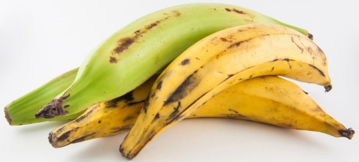 This is what plantain bananas look like.