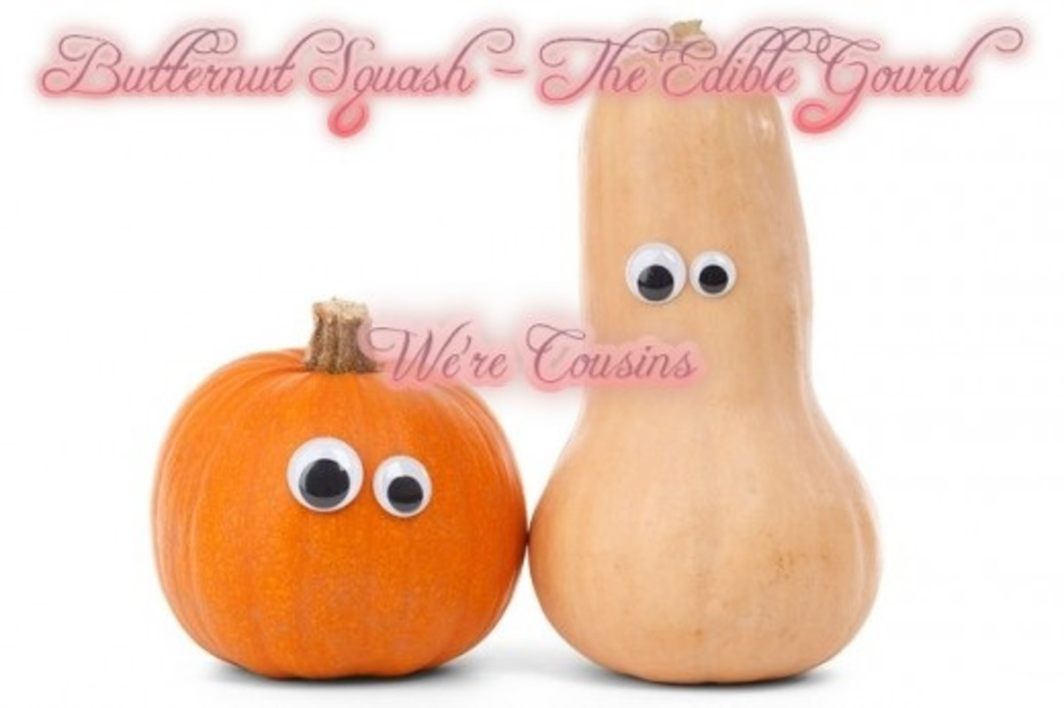Pumpkins and butternut squash are both gourds.