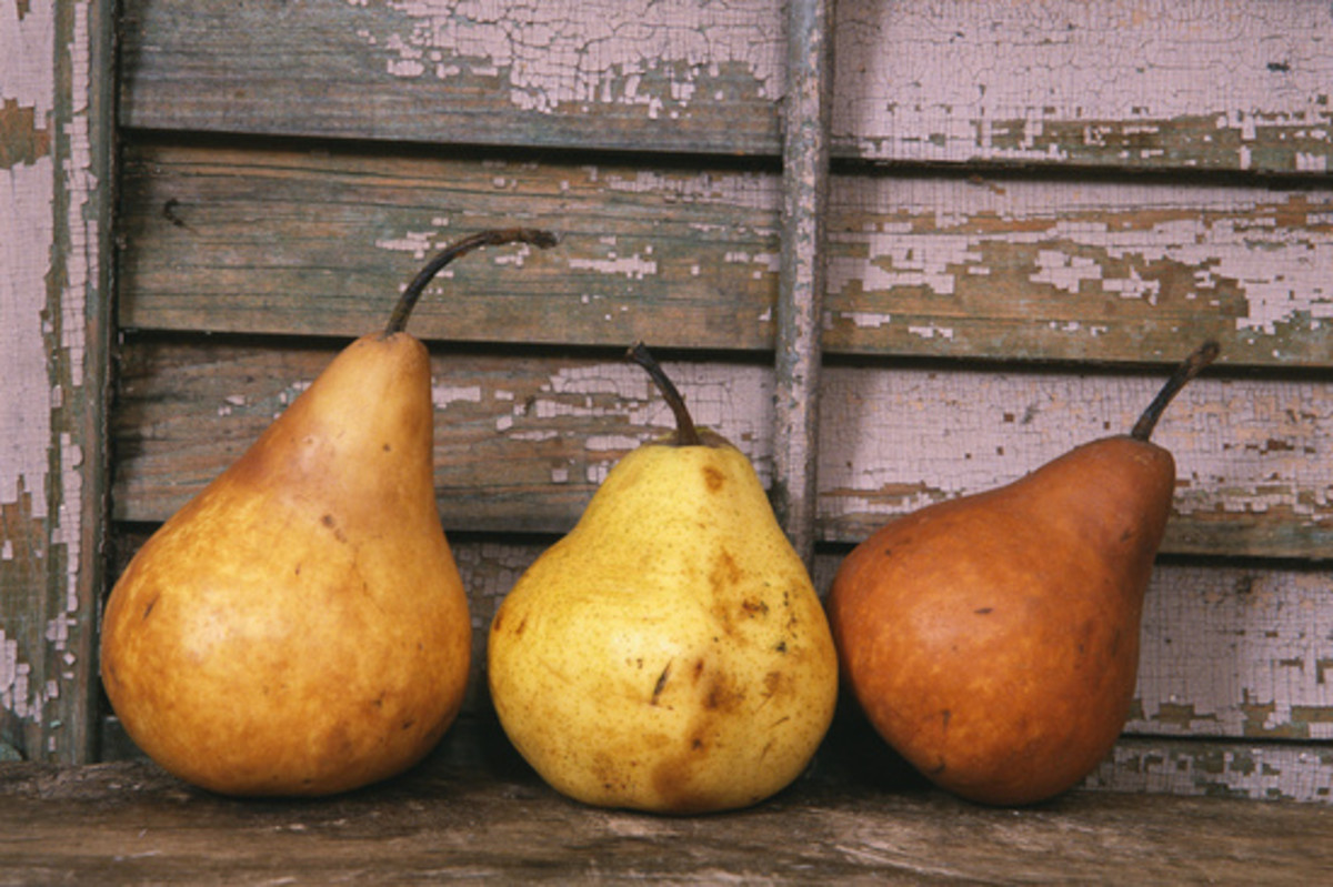 how-to-preserve-fresh-pears
