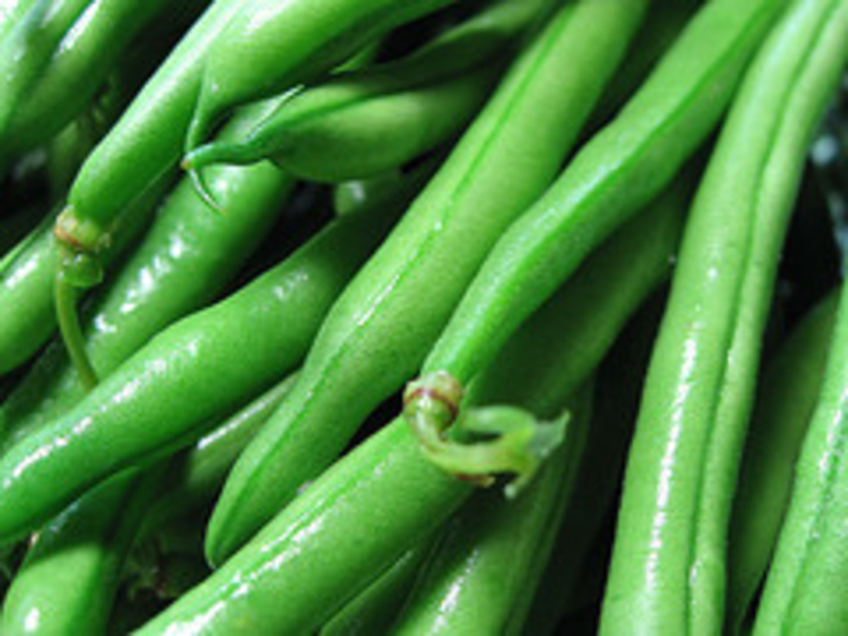 Washed Green Beans (Photo courtesy from beautifulcataya - Flickr)