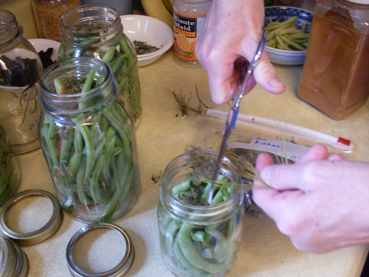 Put into each quart jar: 2 cloves of garlic, 2 heads of dill (about 1 teaspoon of seeds), 1/2 teaspoon cayenne pepper. For each pint, that's: 1 clove garlic, 1/2 teaspoon dill seeds, 1/4 teaspoon cayenne.