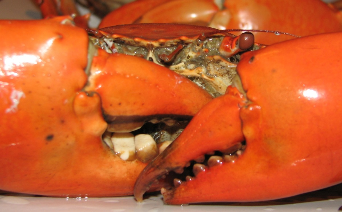 How to Cook and Eat In-the-Shell Crab