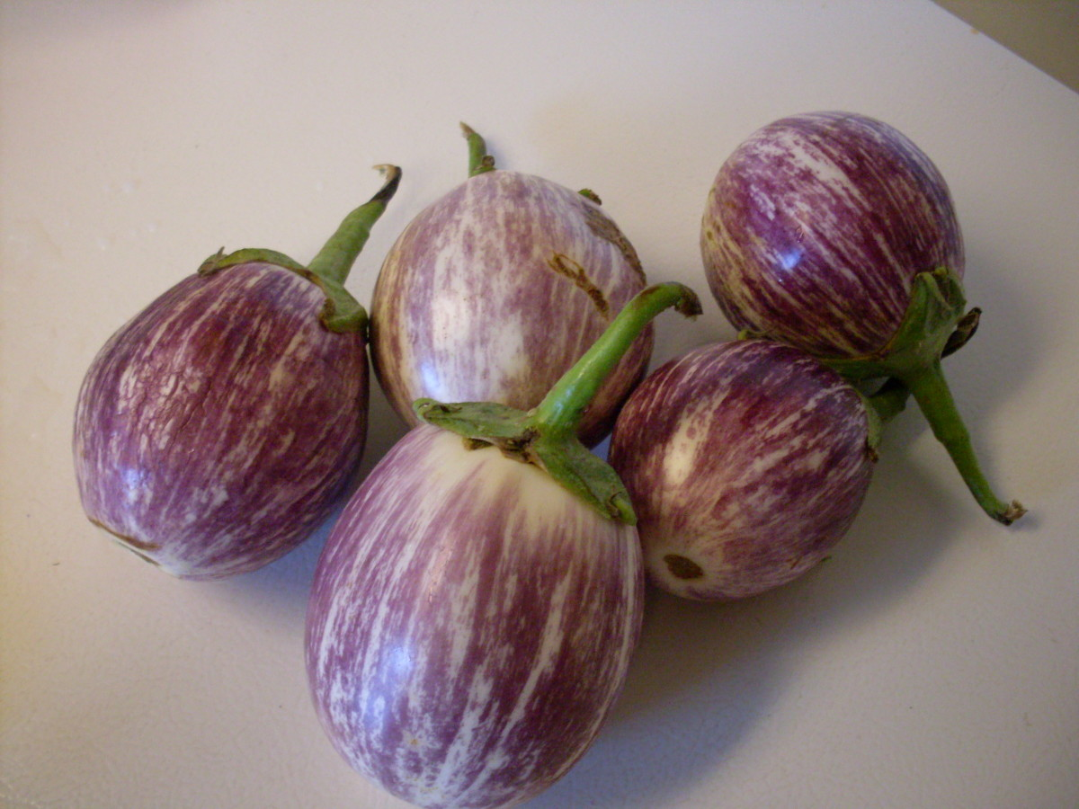 Select firm, fresh eggplants, as they will preserve better than ones that are already wrinkled or deteriorating.
