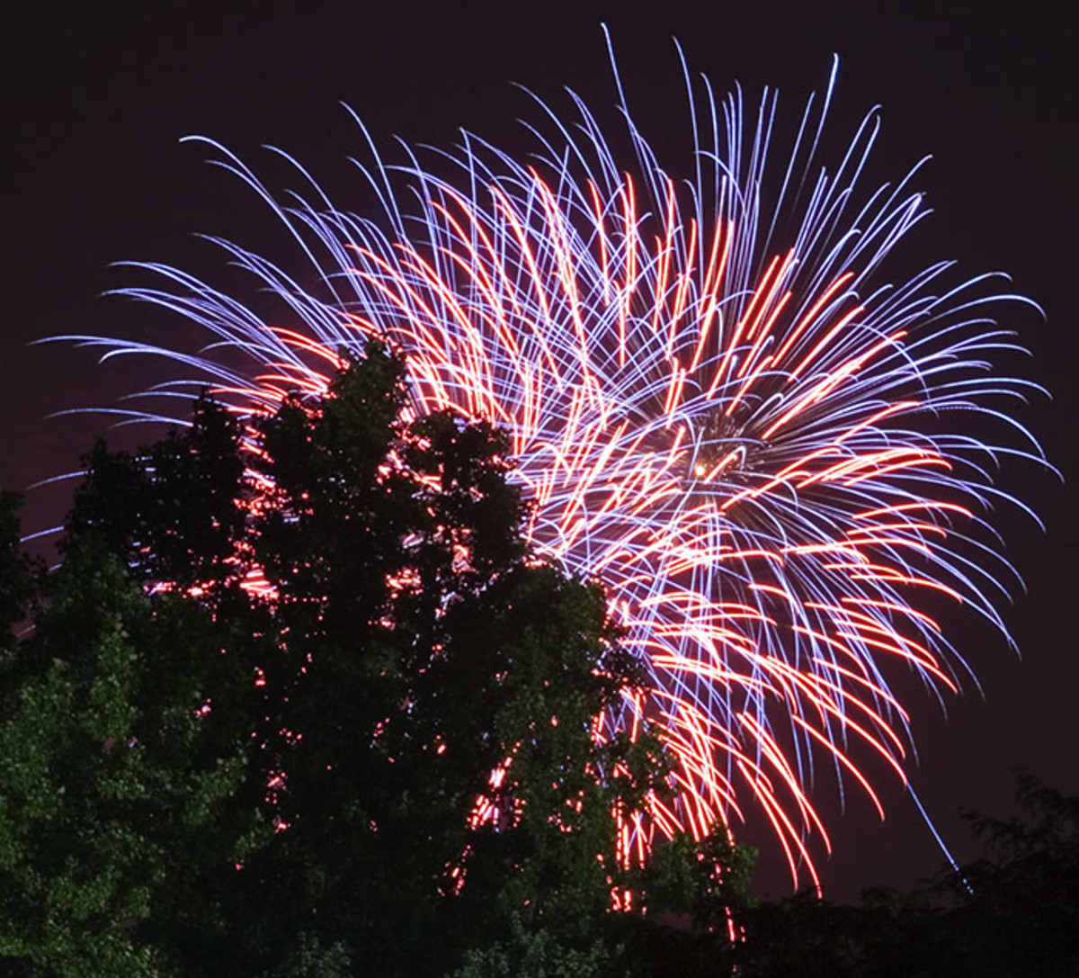 Fireworks over the trees
