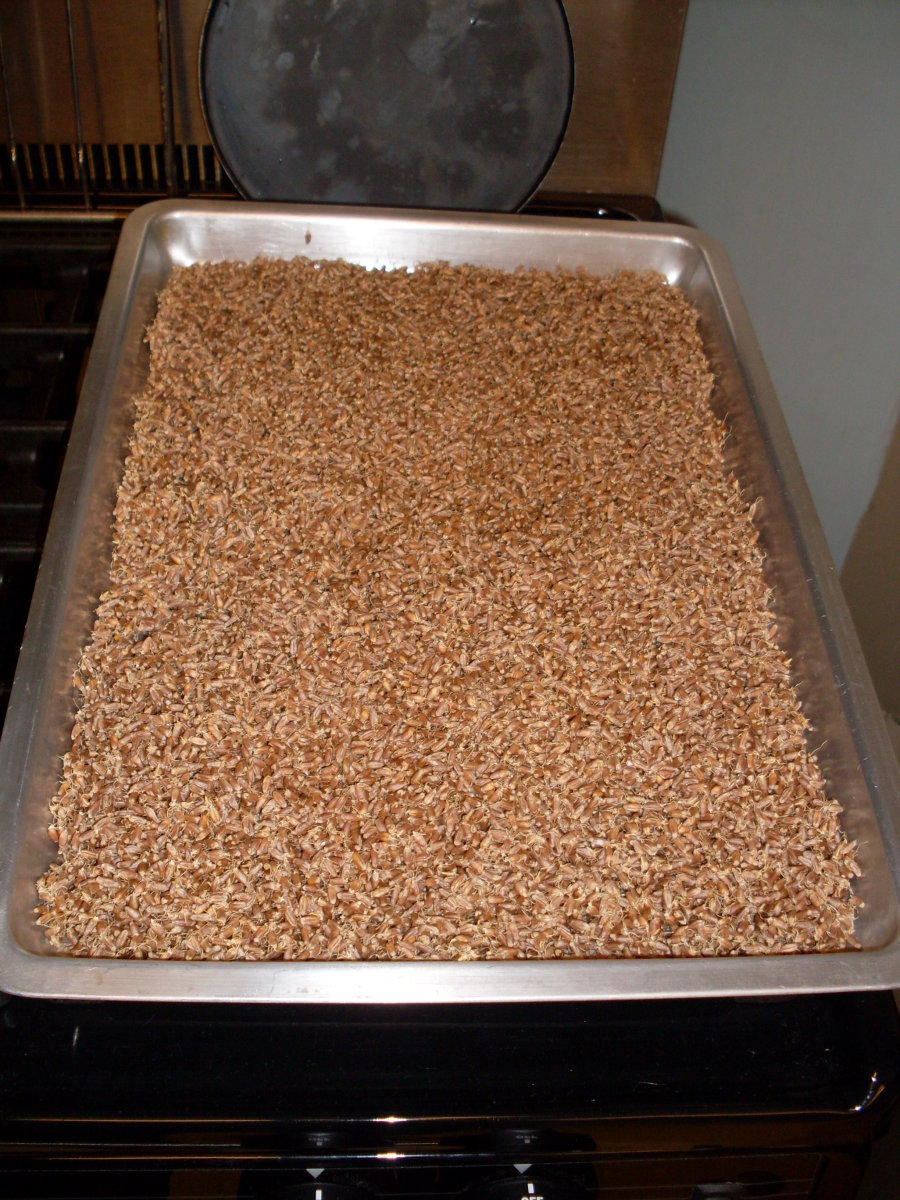 Spread the sprouted wheat out on a baking pan and set it in a warm (not hot) place to dry thoroughly.