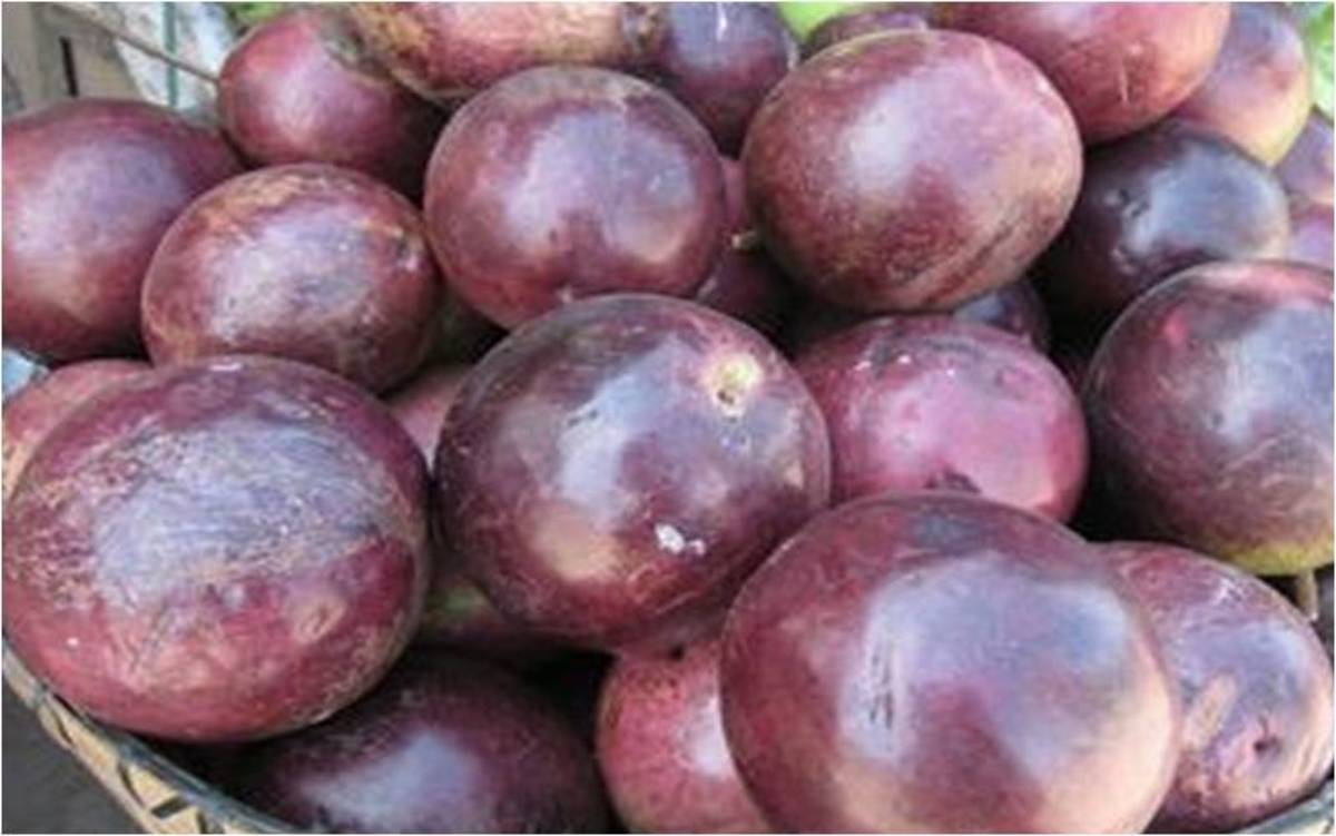 Purple star apples