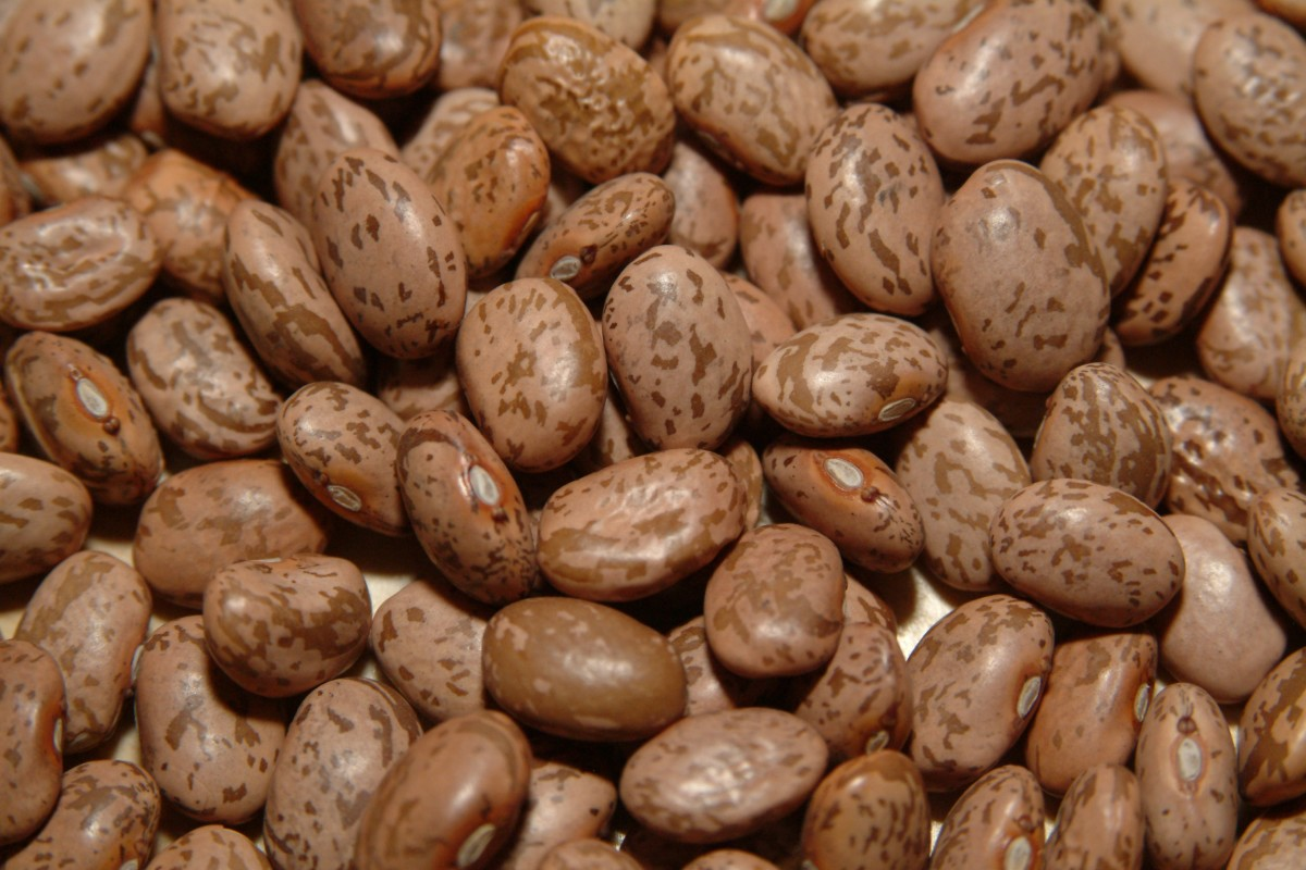 Fresh dried pinto beans.