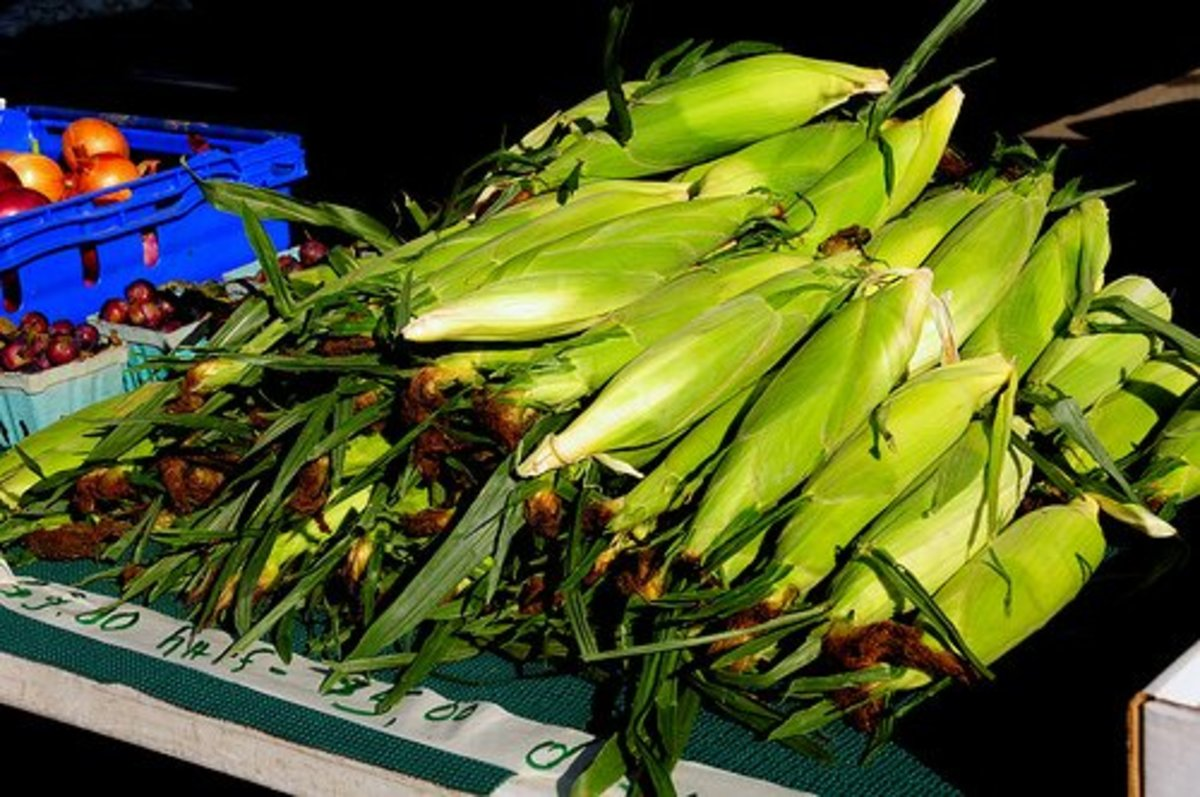 Corn ears can be roasted in the oven in their shucks.