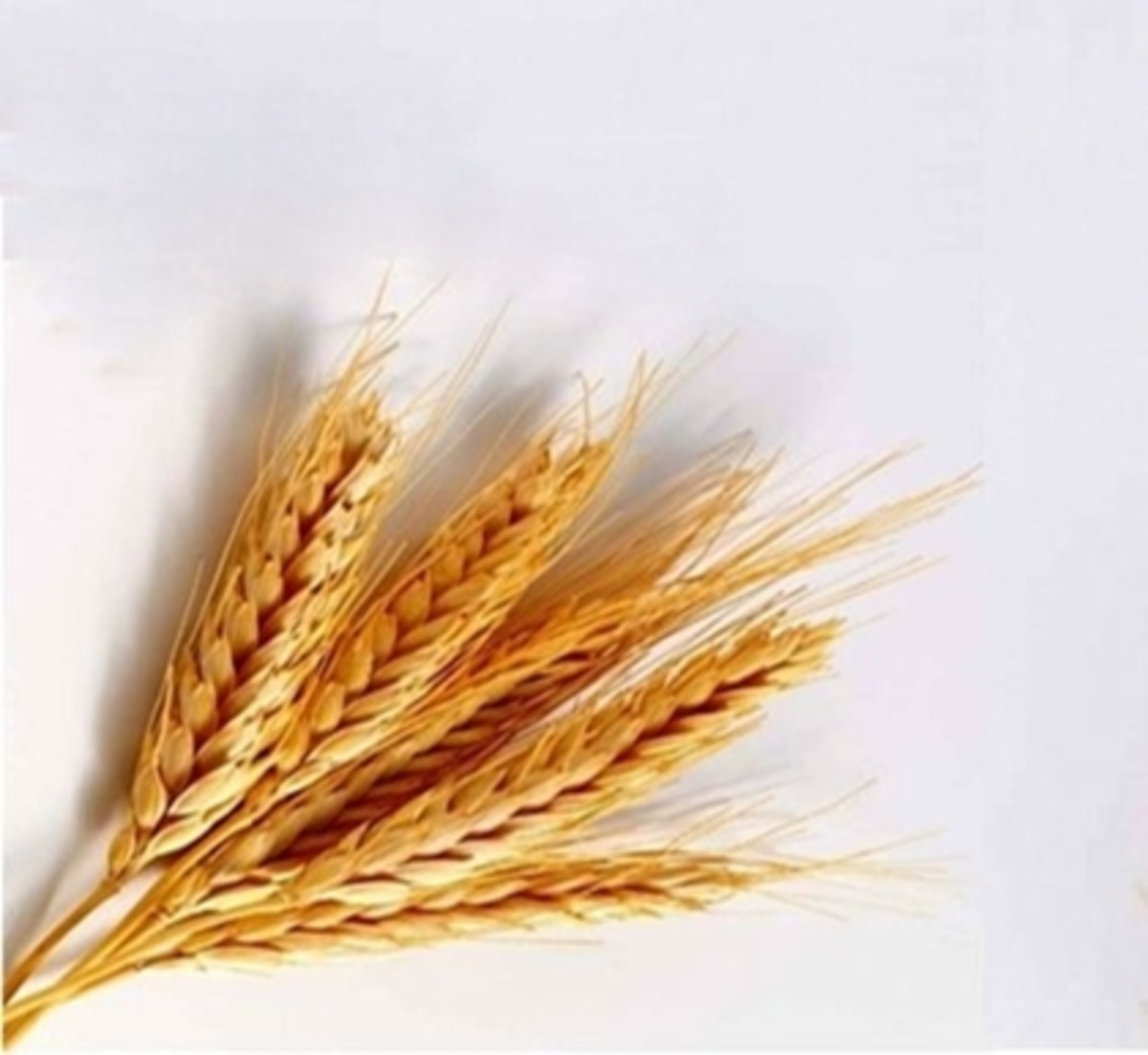 Uses of Barley and Recipes