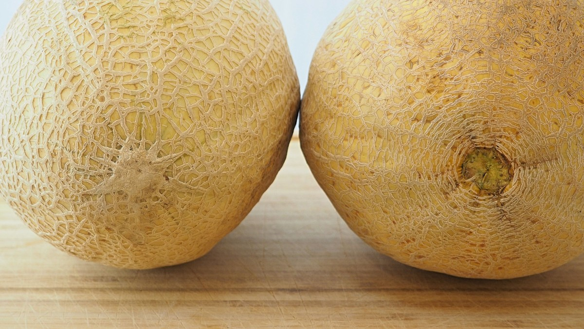 Cantaloupe Origin / Most researchers believe that it originates either from persia, india or africa.