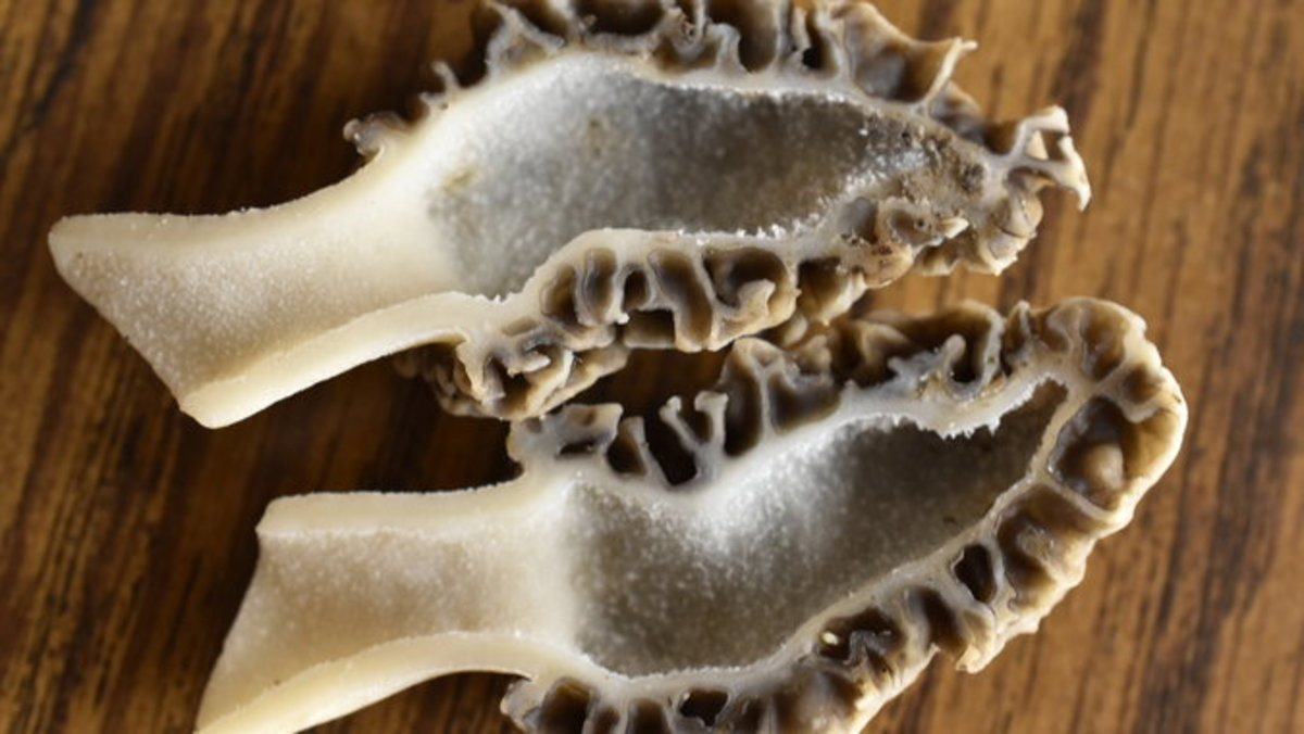 As you can see real morels have no cotton like substance in the stem.