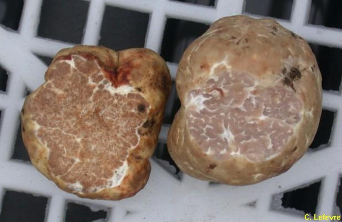 Oregon White Truffles