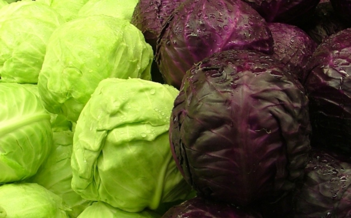 Green and Purple cabbages image from wiki commons