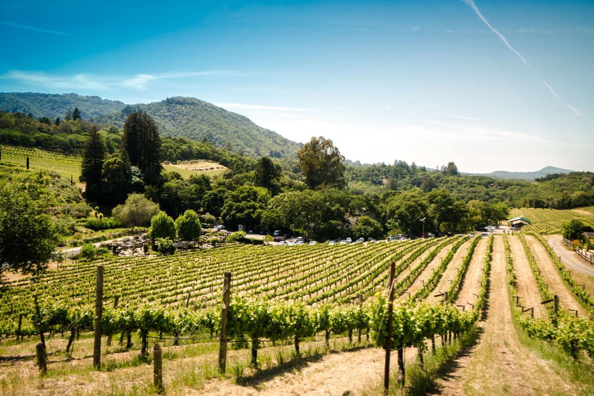 Sonoma wine country, California