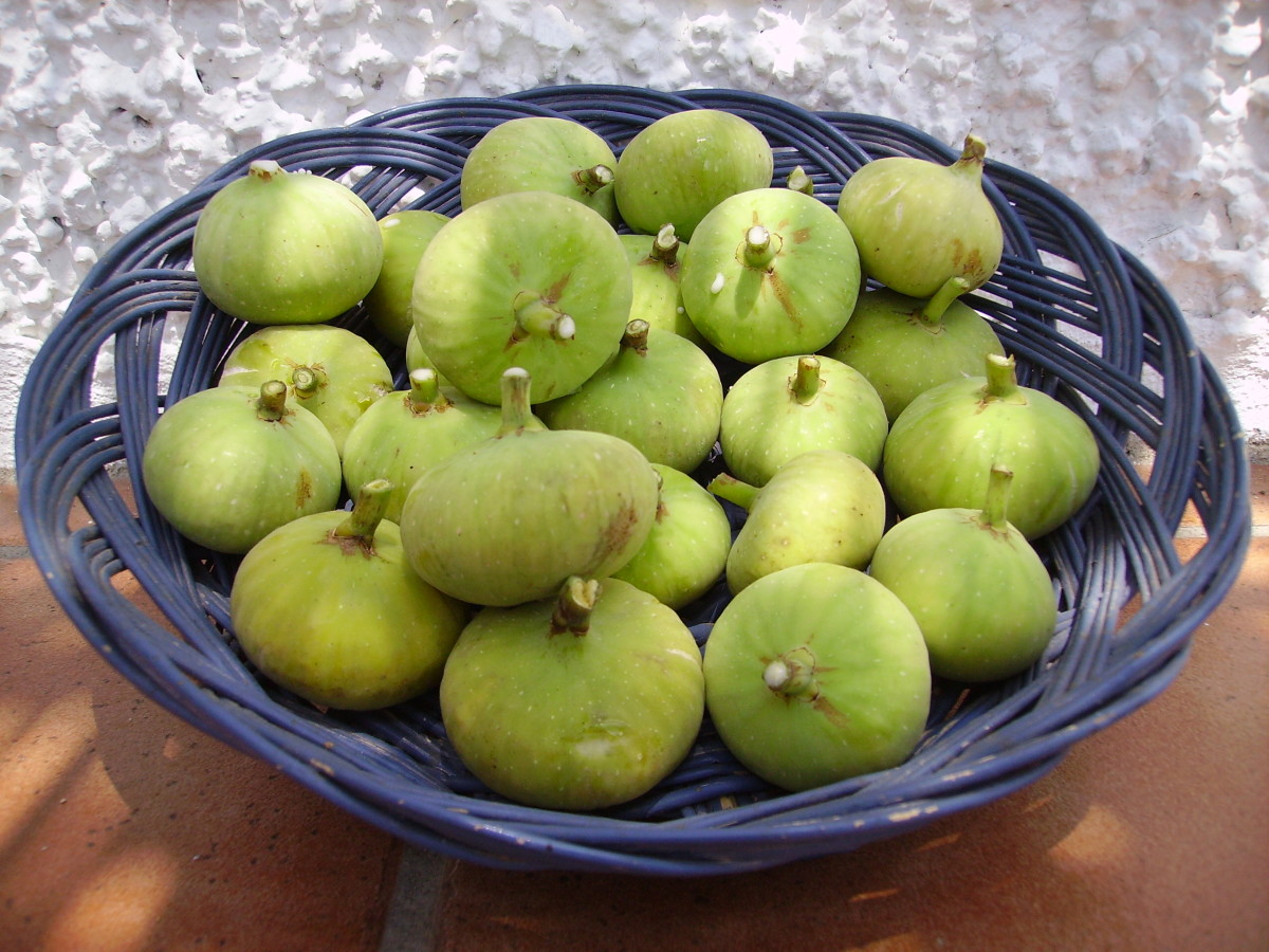 Fresh figs have a short shelf life