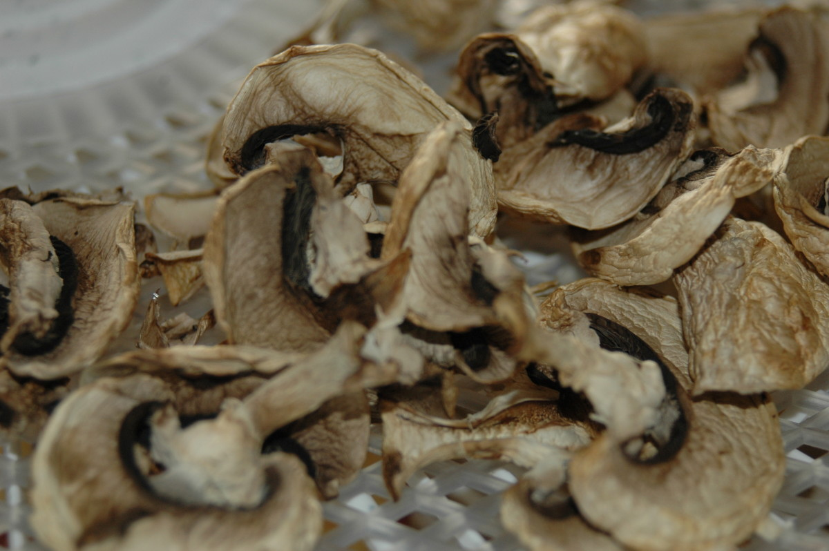 Dried White Mushrooms
