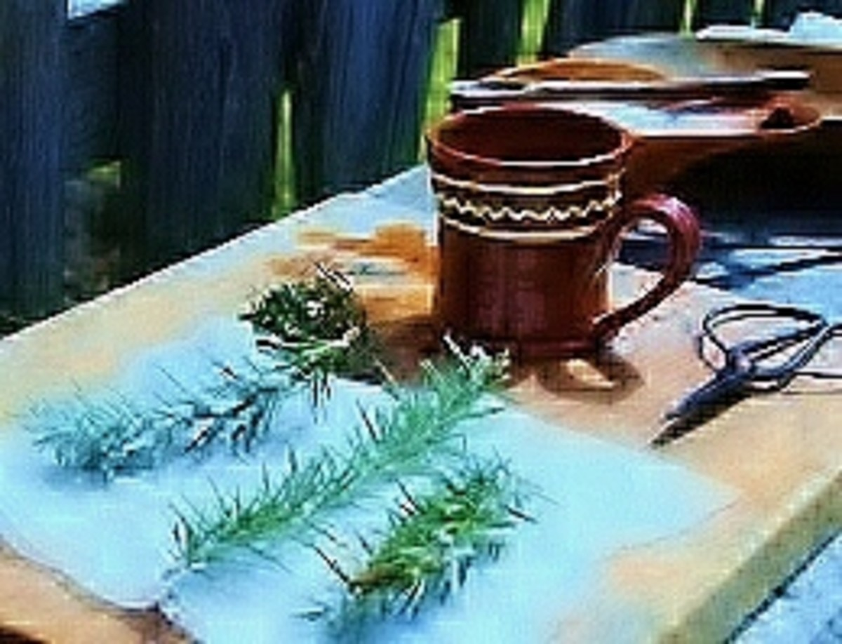 After dipping sprigs in a hot cup of thyme-flavored water, the rosemary is sprinkled with sugar and placed on cheese cloth.