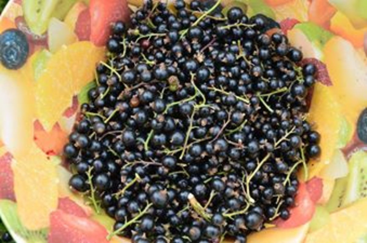 A bowl of juicy homegrown blackcurrants