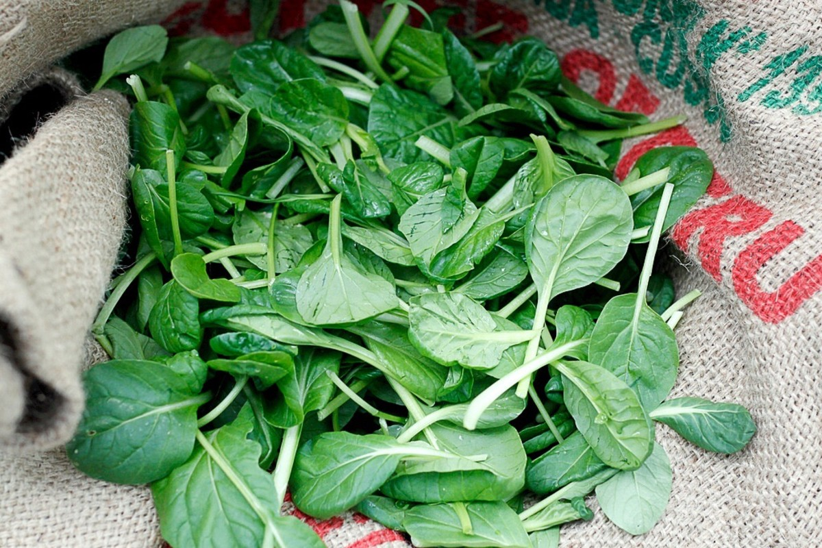 Tatsoi leaves
