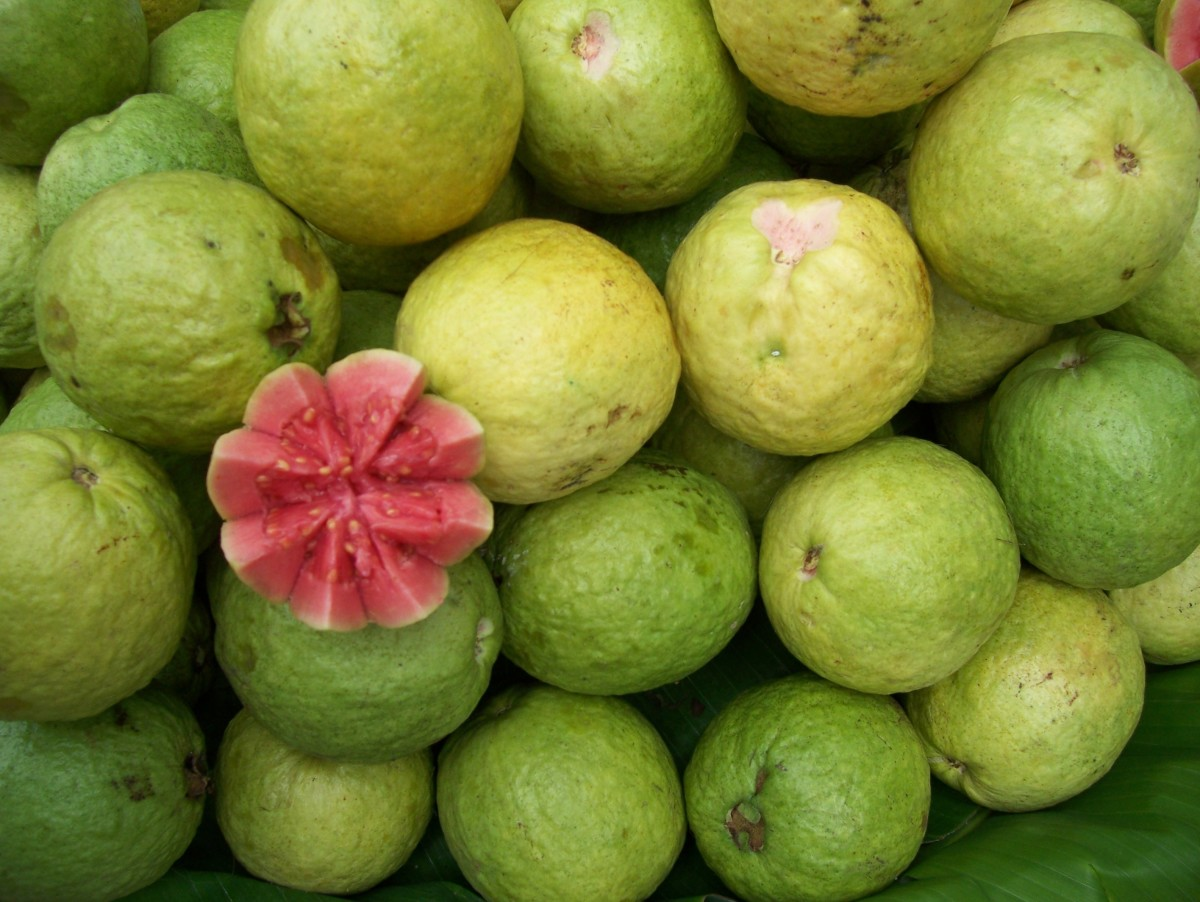 Packed with tiny seeds or almost seedless, guava fruit can be served fresh or blended into a juice.