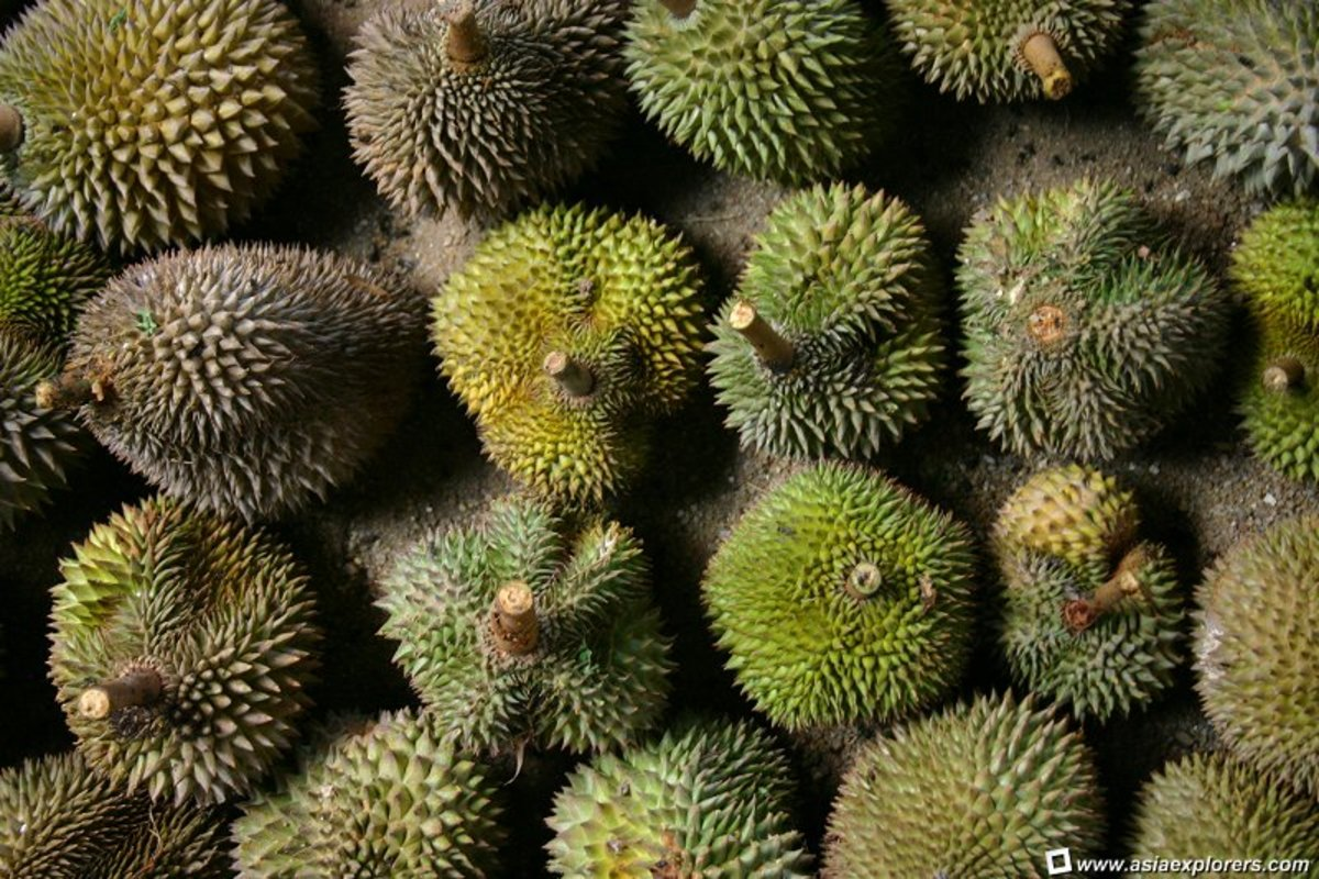 Durians of all shapes