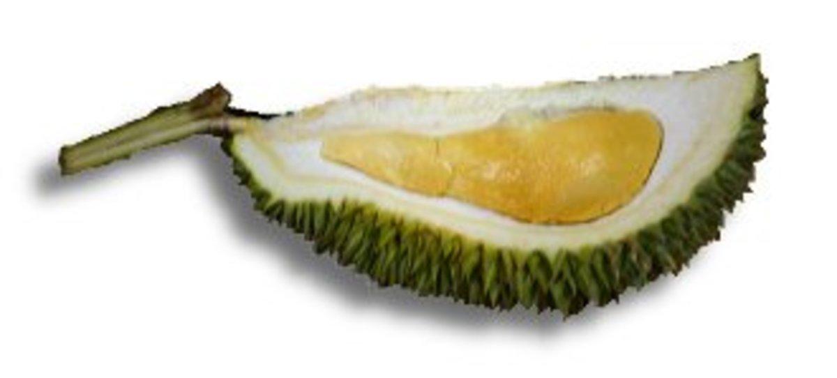 Hybrid Ang Jin