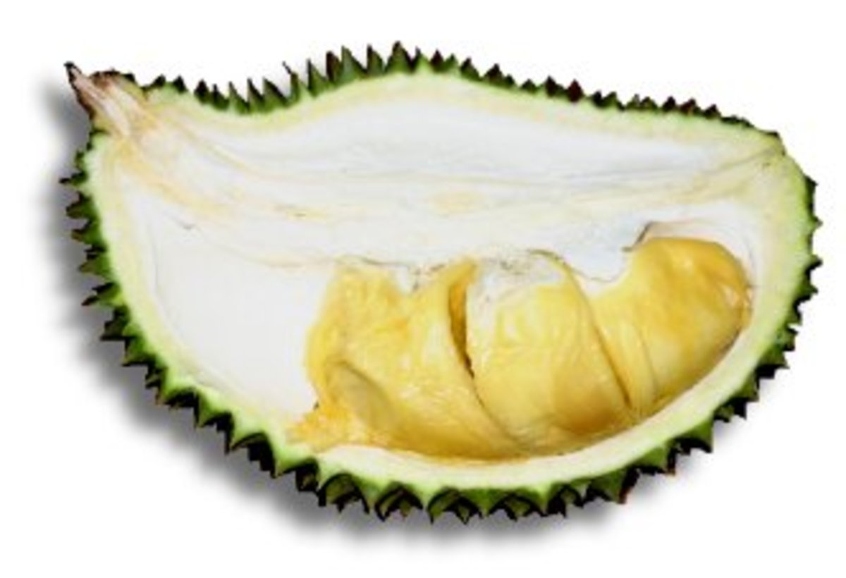 Hybrid Ooi Kyau