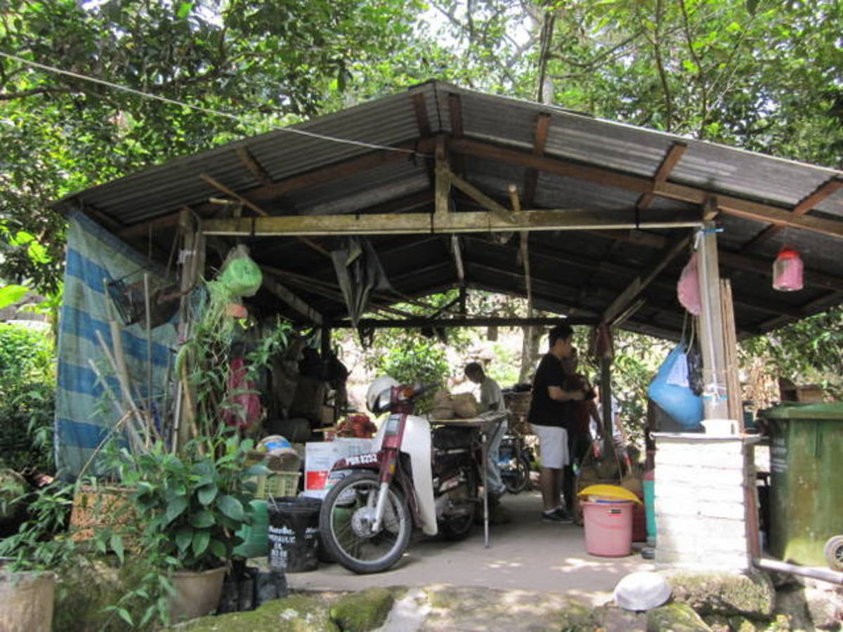 The hidden secret durian shed in the farm high up in the mountain