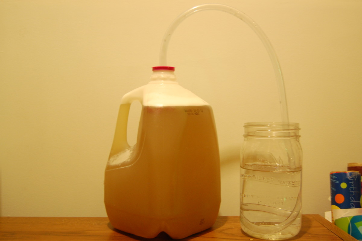 How to Make Milk Jug Mead (Honey Wine) at Home - with Photos!