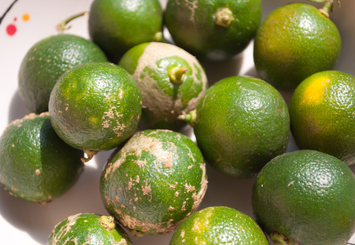 Calamansi (Philippine Lime)