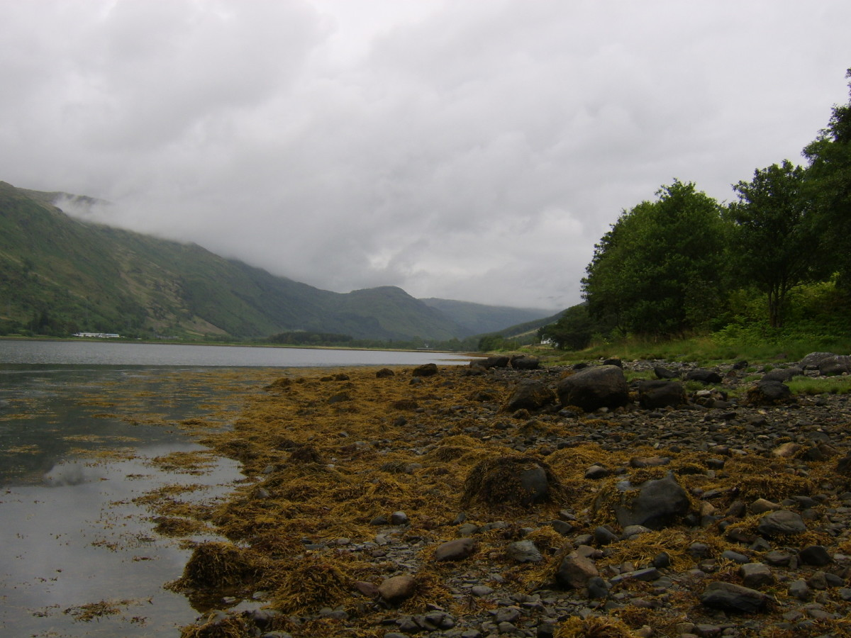 Cairndow beach, near the head of Loch Fyne in the West of Scotland, is where the mussels featured on this page were collected -  providing some compensation at the end of a less than successful fishing trip...