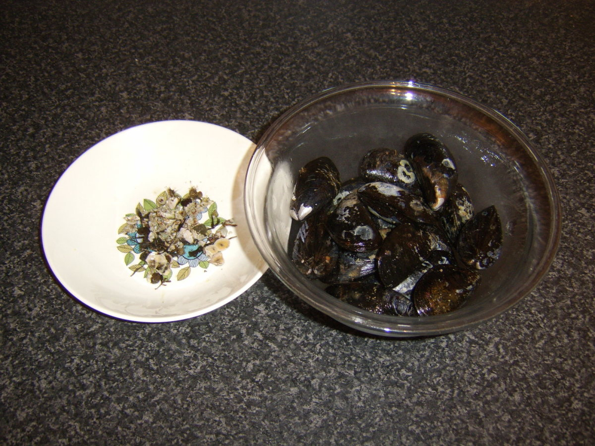 Barnacles and beards removed from fresh mussels