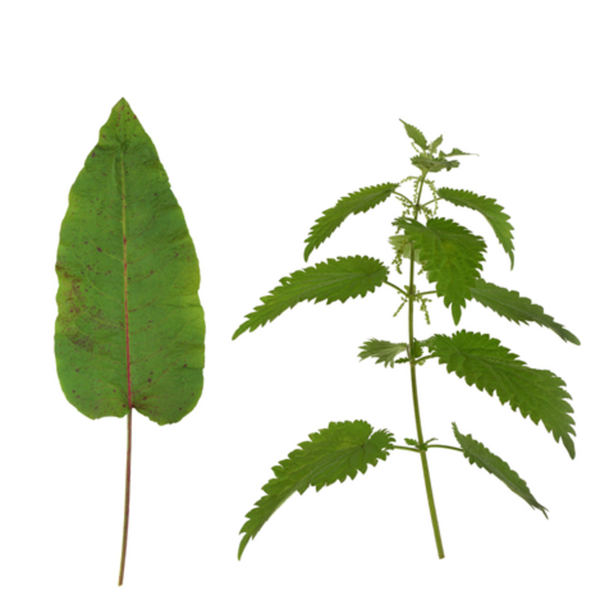 dock leaf and nettle
