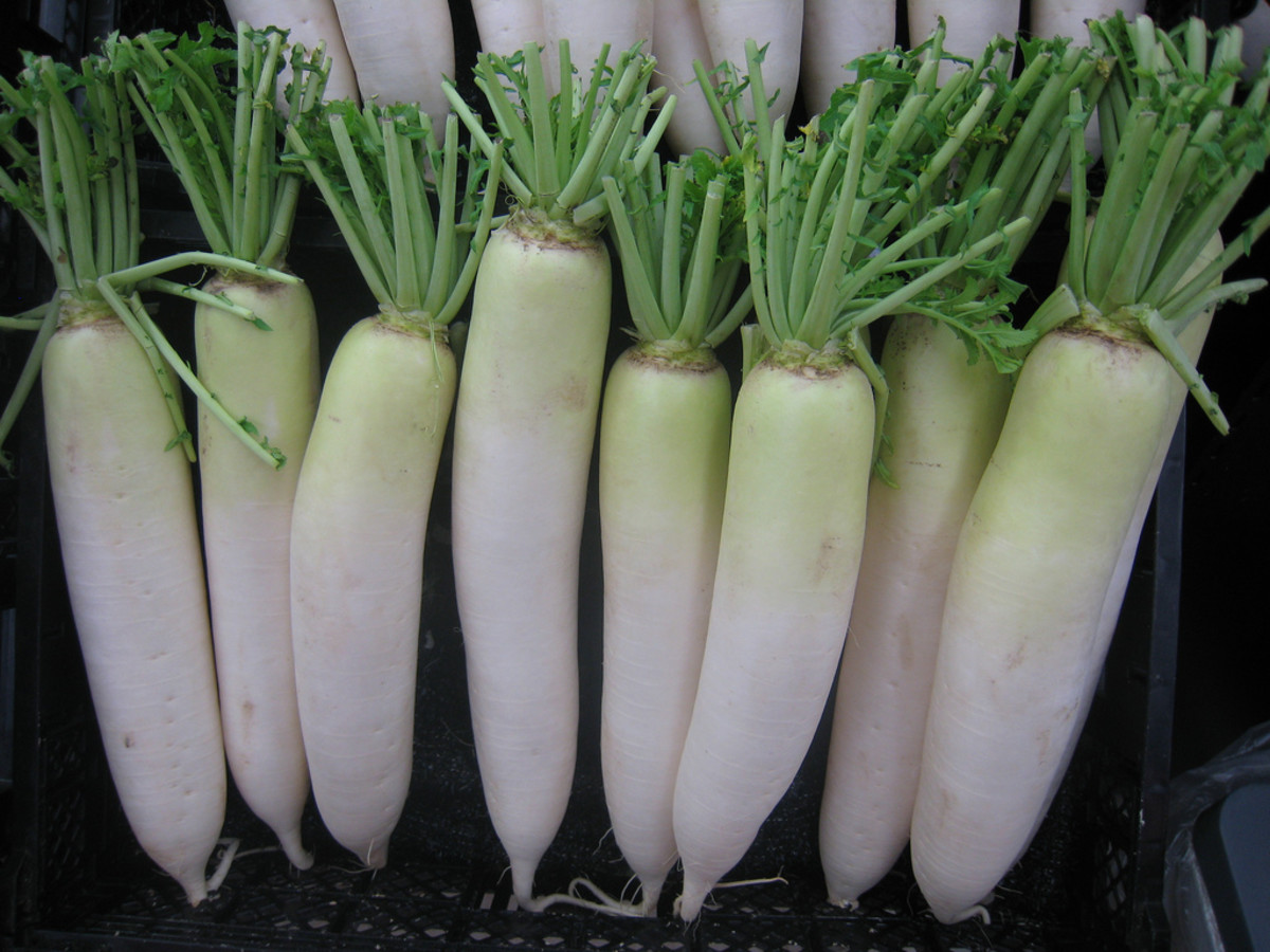 Radish is delicious in a salad or with more complex dishes.