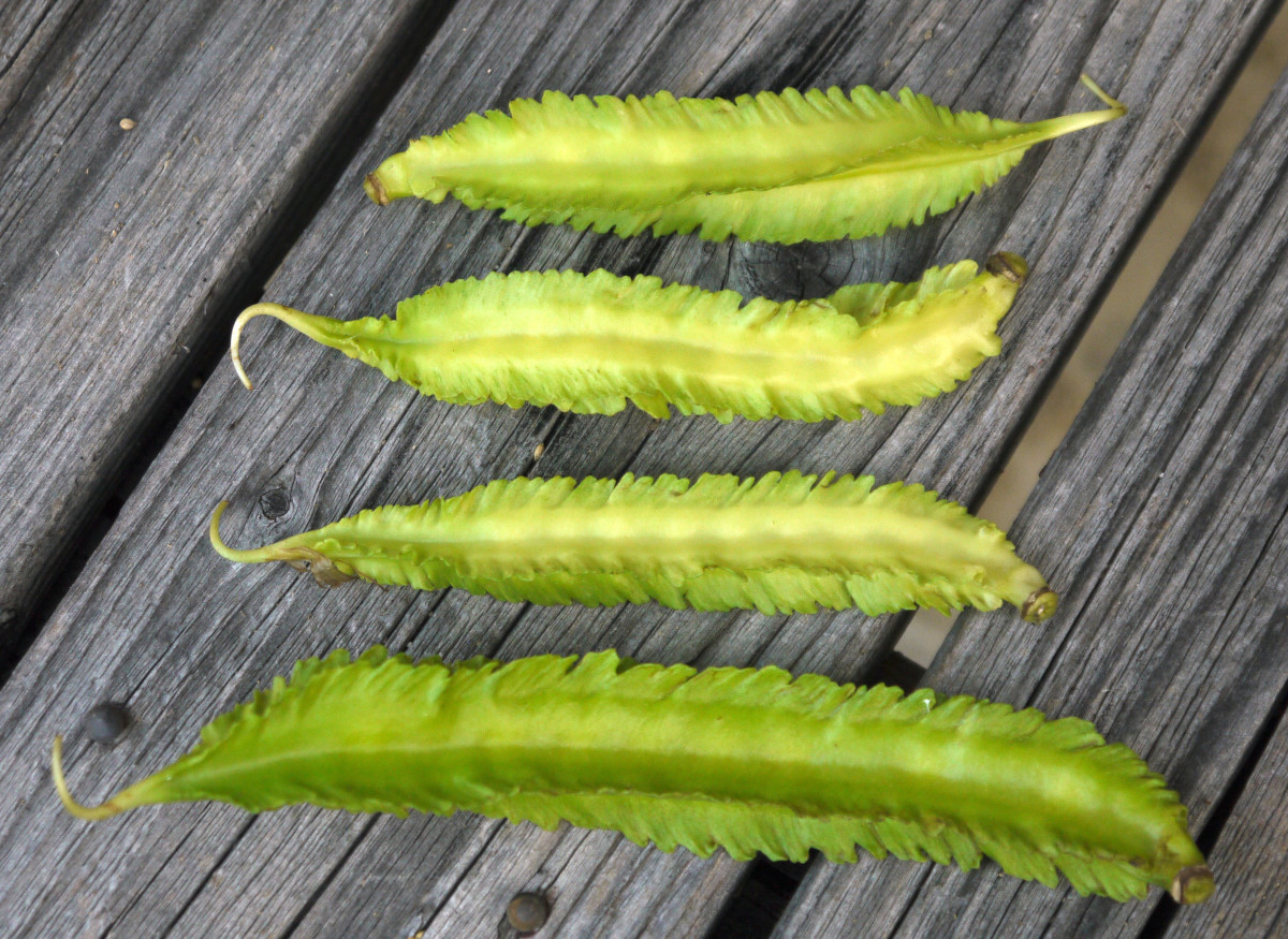 Winged beans are often used in stews.