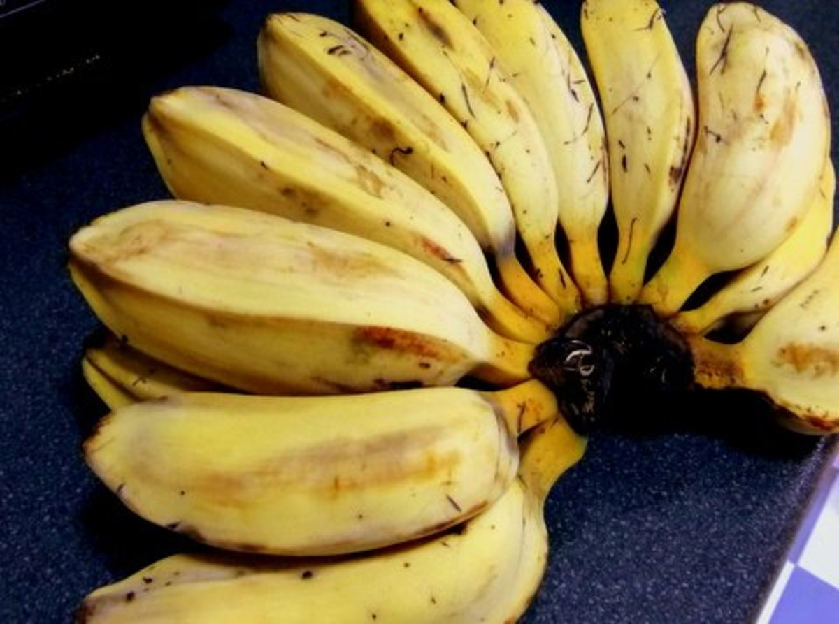 This is Pisang Abu, another variety suitable for pisang goreng or banana fritters
