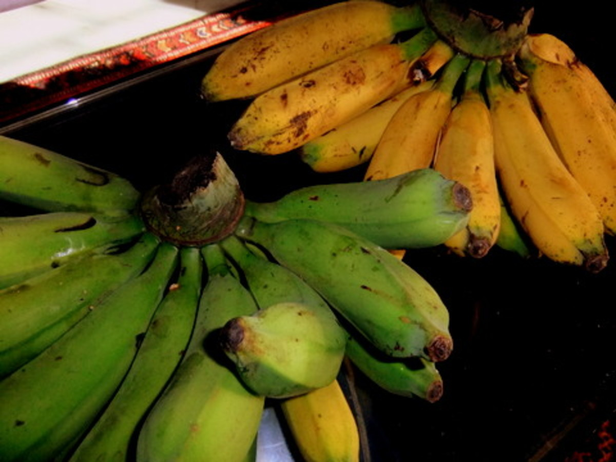 Pisang raja variety that came from our garden and what I used for this banana fitter recipe.