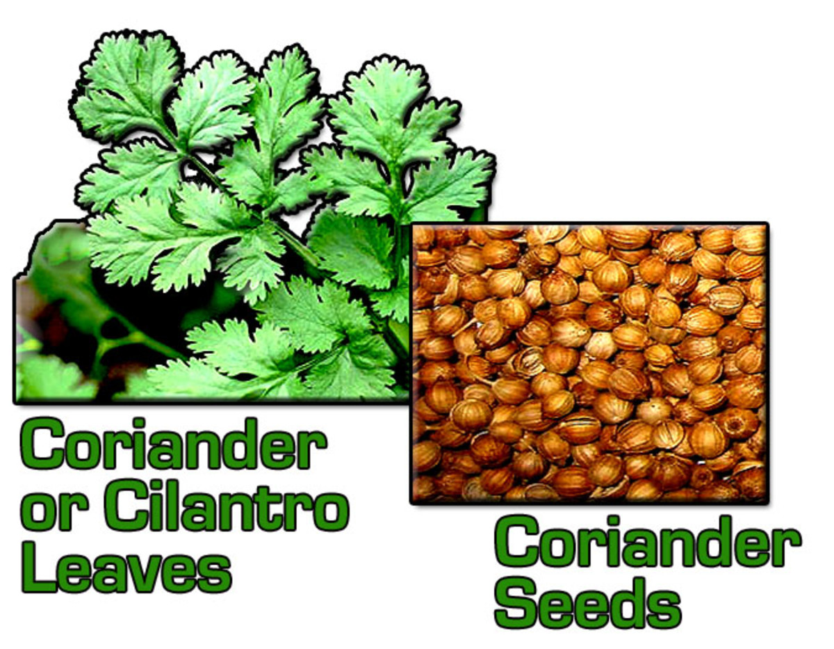 The leaves are known as coriander or cilantro; the seeds are called coriander.