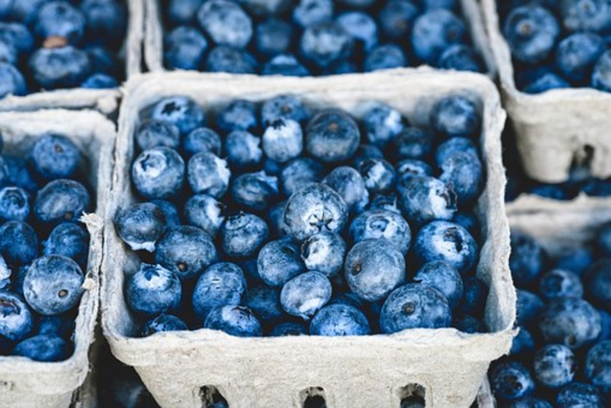 Blueberries are powerhouses of nutrition