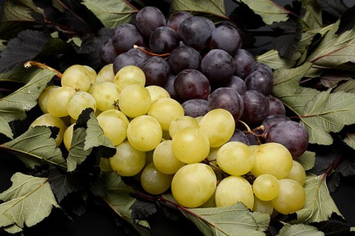 Luscious grapes