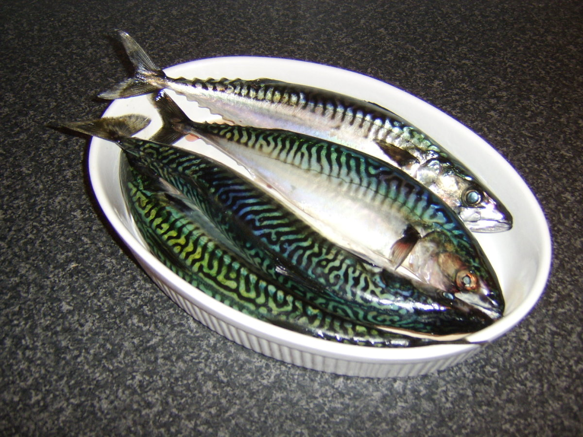 Four of the six mackerel I brought home ready to be prepared for cooking