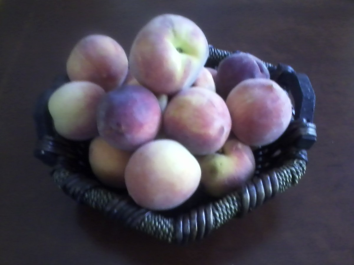Yellow peaches grown in eastern NC