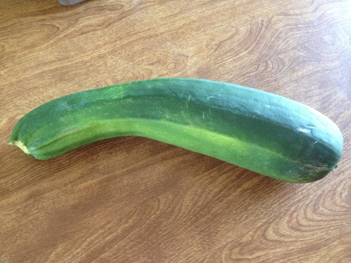 Even if you forget to check your plant and you get a humungous zucchini, it will still be good for baking.  Just double the recipe!