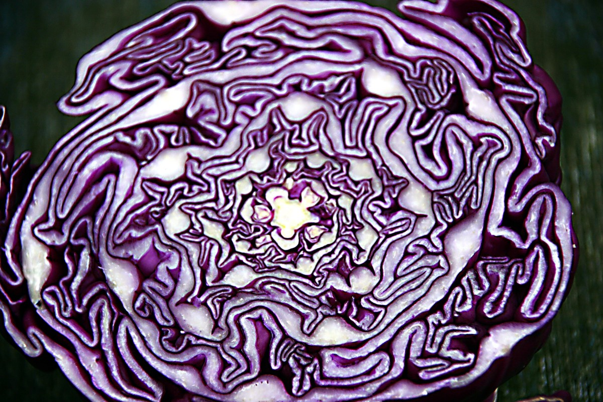 Red cabbage contains health-promoting pigments called anthocyanins.