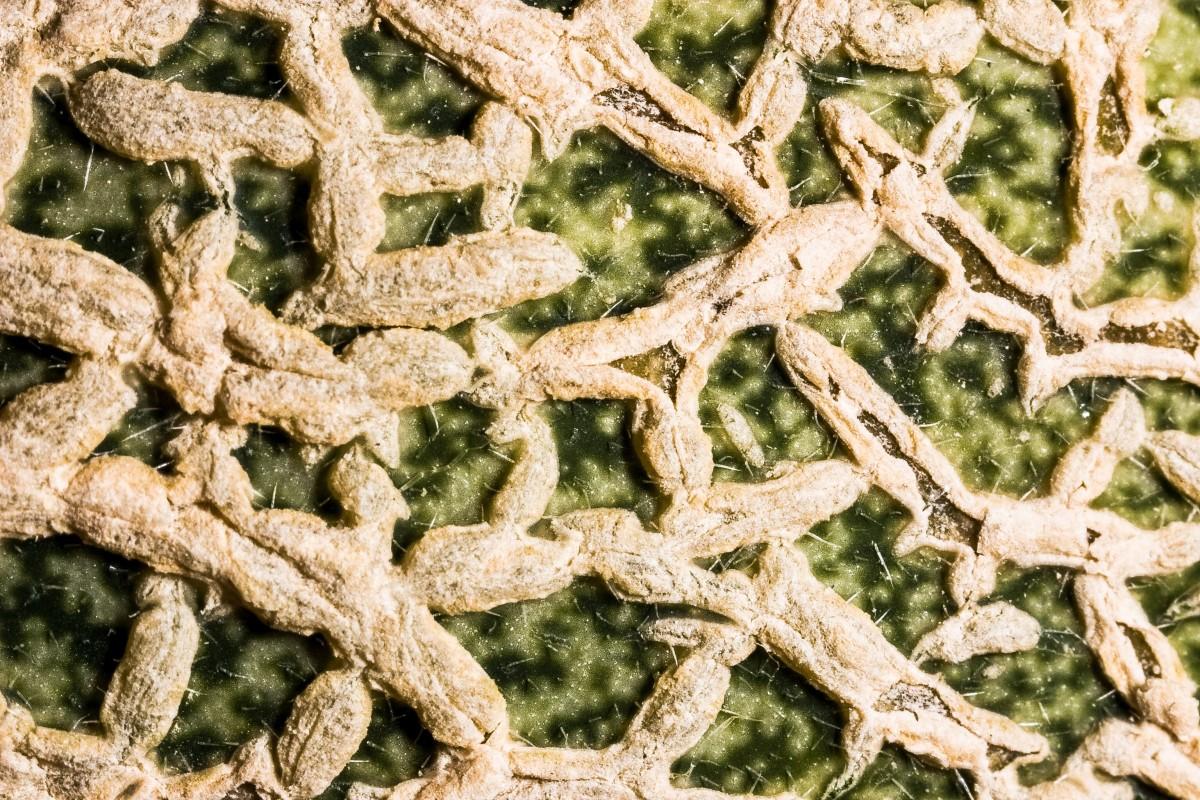An interesting macro photo of cantaloupe rind or skin