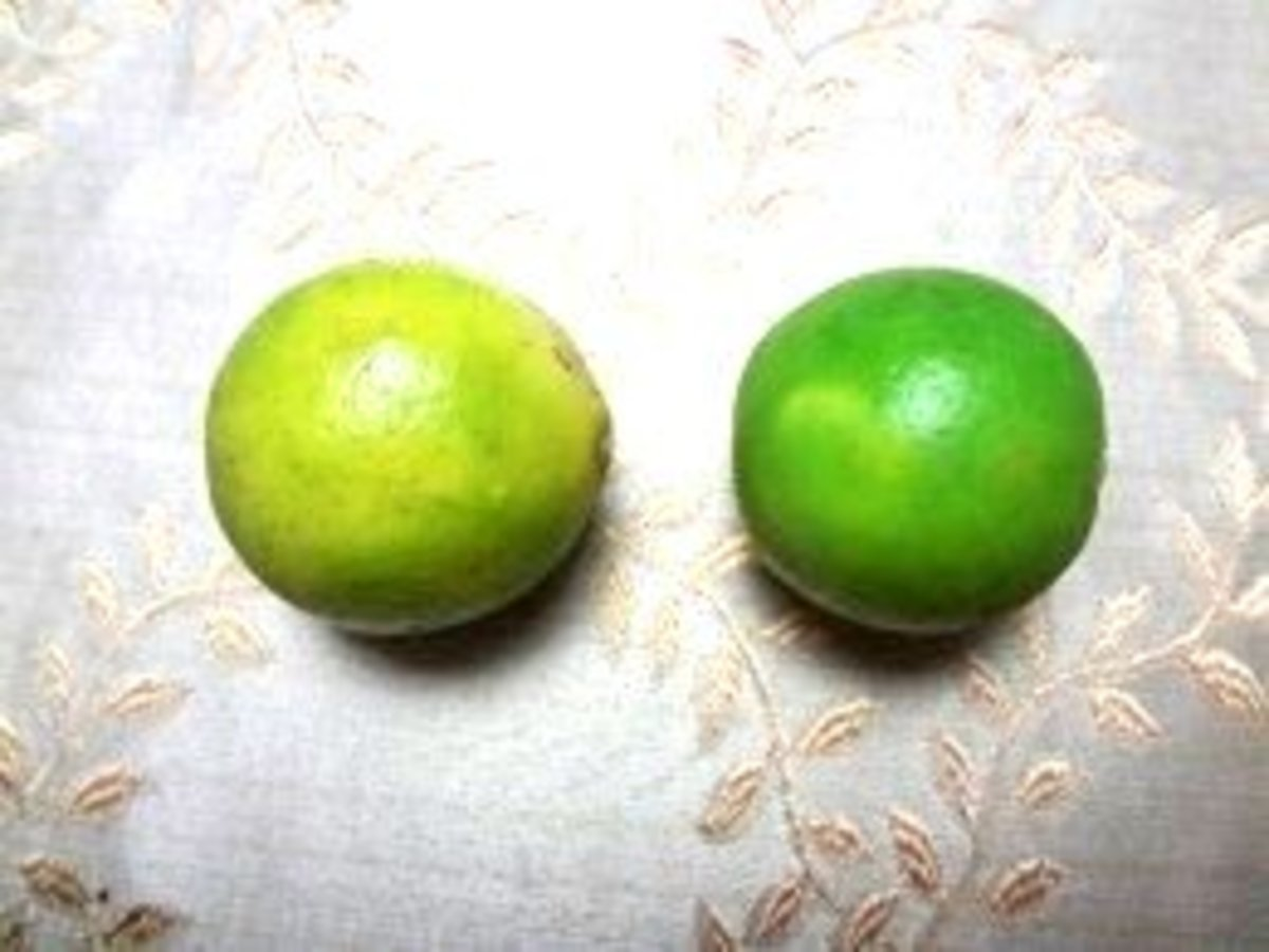 Key limes are smaller and rounder than Tahitian limes and turn yellow as they ripen