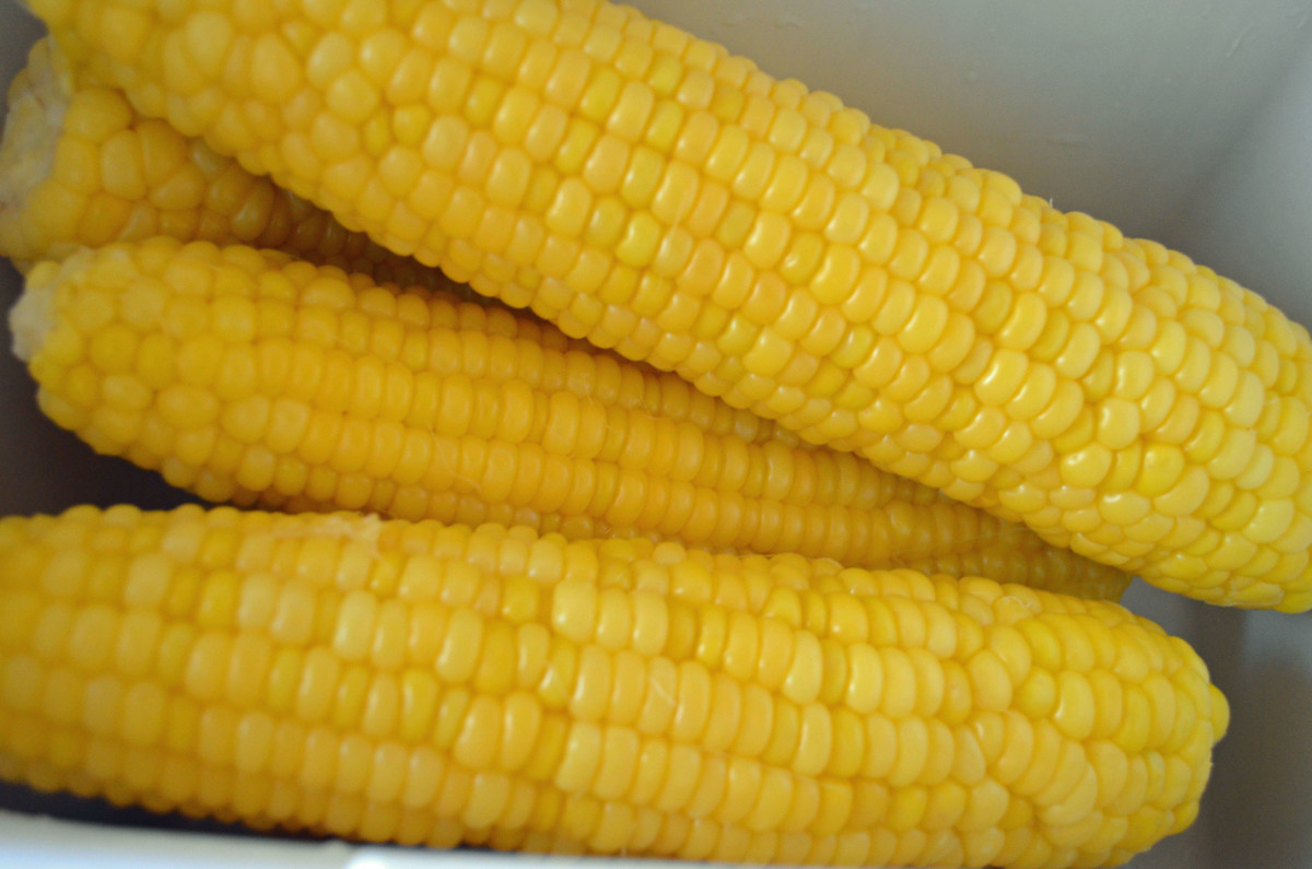 Corn on the cob cooked in an ice chest.