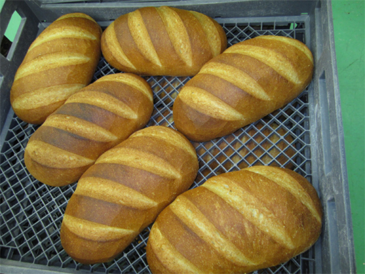 Campagnard loaves on delivery trays.